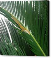 Anole With Palm - Inquisitive Canvas Print