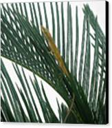 Anole With Palm - Looking Up Canvas Print
