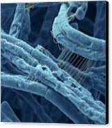 Anthrax Bacteria Sem Canvas Print
