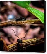 Ants Adventure Canvas Print by Bob Orsillo