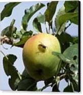 Apple Bee Canvas Print
