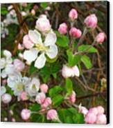 Apple Blossom Pink Canvas Print