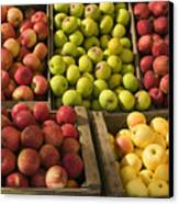 Apple Harvest Canvas Print