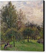Apple Trees And Poplars In The Setting Sun Canvas Print by Camille Pissarro