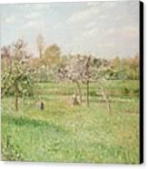 Apple Trees At Gragny Canvas Print