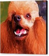 Apricot Poodle Canvas Print