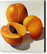 Apricots Canvas Print by Shannon Grissom