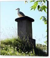 Arctic Tern Canvas Print
