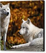 Arctic Wolves On Rocks Canvas Print by Michael Cummings