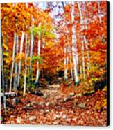 Arethusa Falls Trail Canvas Print by Greg Fortier