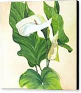 Arums Canvas Print