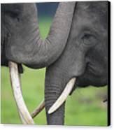 Asian Elephant Greeting Canvas Print