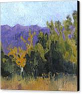 Aspen Color Canvas Print