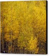 Aspen Fall 2 Canvas Print by Marty Koch