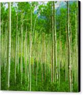 Aspen Pano Canvas Print by Stuart Deacon