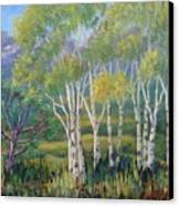 Aspens In The Rockies Canvas Print