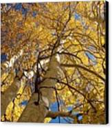 Aspen's Reaching  Canvas Print