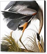Audubon: Heron Canvas Print