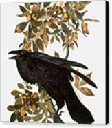 Audubon: Raven Canvas Print by Granger