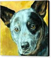 Australian Cattle Dog Blue Heeler On Gold Canvas Print by Dottie Dracos
