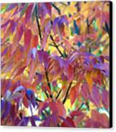 Autumn Ash Tree 1 Canvas Print