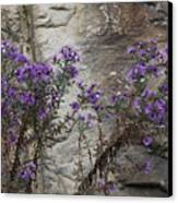 Autumn Asters Canvas Print by Randy Bodkins