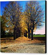 Autumn Avenue Canvas Print by Niki Mastromonaco