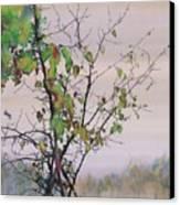 Autumn Birch By Sand Creek Canvas Print by Carolyn Doe