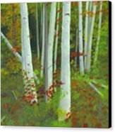 Autumn Birches Canvas Print