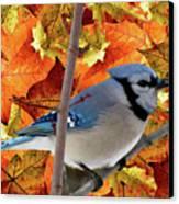 Autumn Blue Jay Canvas Print by Debra     Vatalaro
