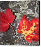 Autumn Colors Canvas Print by Kate  Leikin