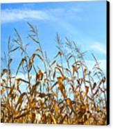 Autumn Corn Canvas Print by Sandra Cunningham