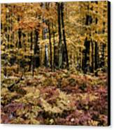 Autumn Dampness Canvas Print