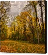 Autumn Forest Canvas Print by Stuart Deacon