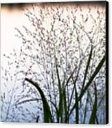 Autumn Grasses Canvas Print