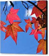 Autumn In The Sky Canvas Print