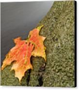 Autumn Leaf Study Canvas Print