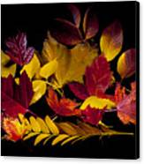 Autumn Leaves Canvas Print by Barry C Donovan