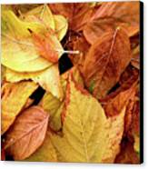 Autumn Leaves Canvas Print by Carlos Caetano