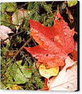 Autumn Leaves Canvas Print by Larry Ricker