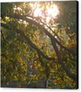 Autumn Morning Glow Canvas Print