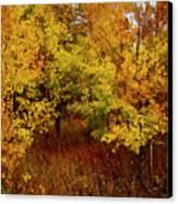 Autumn Palette Canvas Print