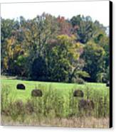 Autumn Pastures Canvas Print by Jan Amiss Photography