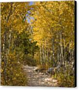 Autumn Path Canvas Print by Andrew Soundarajan