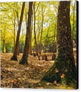 Autumn Scenery Canvas Print by Carlos Caetano