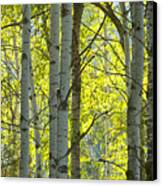 Autumn Through The Trees Canvas Print