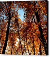 Autumn Tree Canvas Print by Niki Mastromonaco