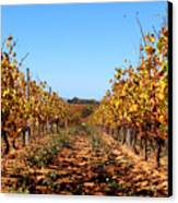 Autumn Vines Canvas Print by K McCoy