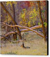 Autumn Yearling Canvas Print