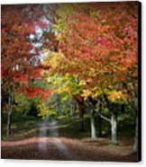 Autumn's Walk Canvas Print by Trina Prenzi